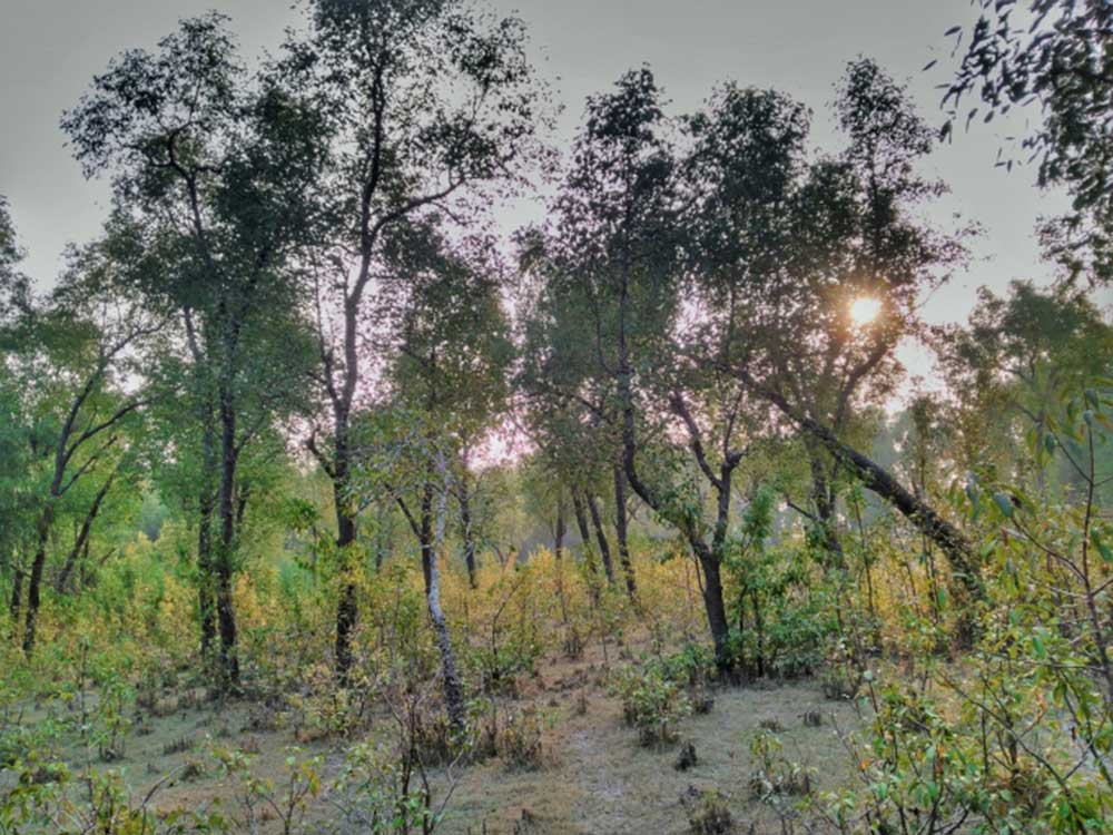 Forest At Nijhum Dwip