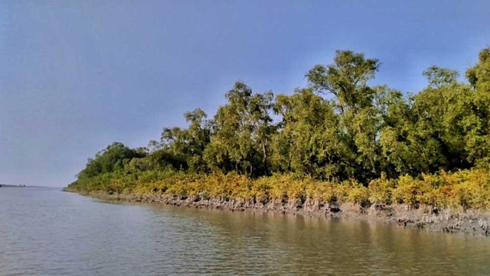 Mangrove Forest At Nijhum Dwip
